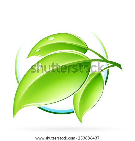 Green sprout with leaves isolated on white - stock photo