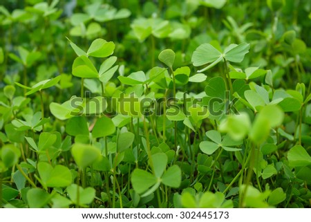 green sprouts germination growth into forest - stock photo