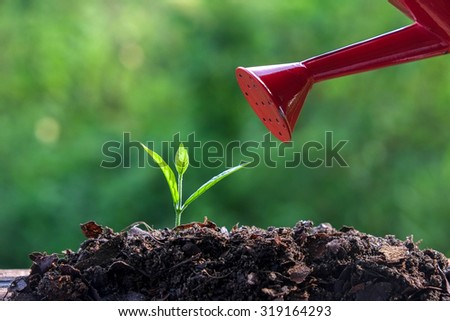 Green sprouts Young plant - stock photo