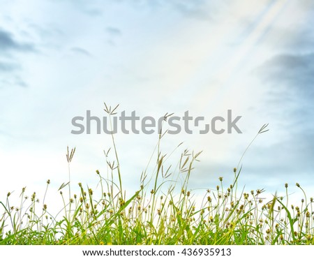 Green Summer Grass Meadow Close-Up With Blurred Sunlight Sky Background - stock photo
