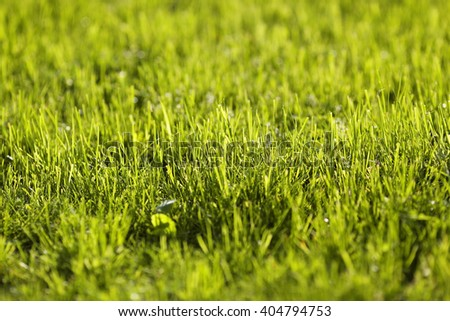 Green Summer Grass Meadow Close-Up With Bright Sunlight. Sunny Spring Background - stock photo