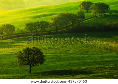 Green summer meadow landscape. Summer in the fields. Idyllic view of hilly farmland in Tuscany in beautiful morning light, Italy. Landscape in the Italy. Morning light in the field. Tree in the meadow - stock photo