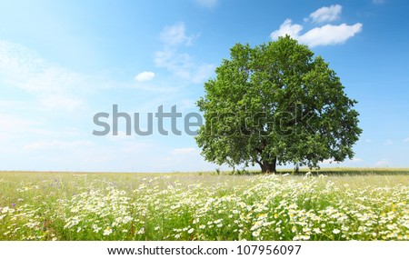 Green summer meadow with flowers and herbs and big oak tree - stock photo
