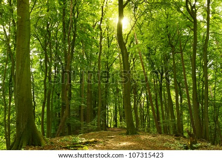Green sunny summer forest with the sun shining behind a tree - stock photo