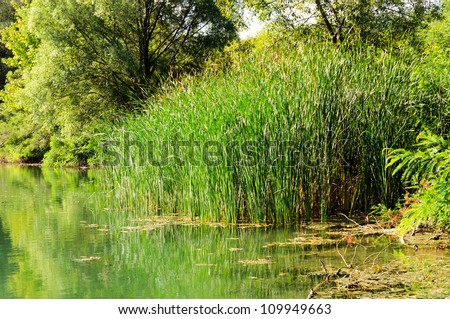 Green swamp near Belgrade - stock photo