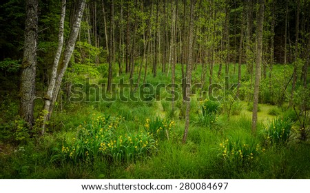 green swamp with yellow irises - stock photo