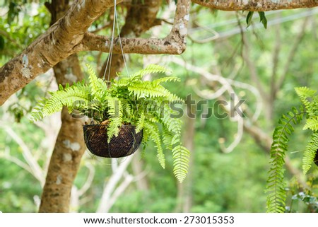 Green Sword Fern under tree - stock photo
