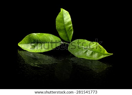 Green tea leaf reflect on black background - stock photo