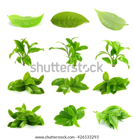 Green tea leaf, tea leaf set group isolated on white background - stock photo