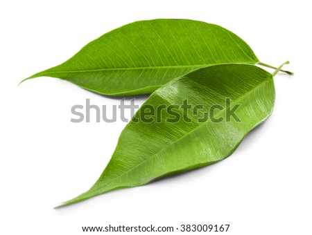 Green tea leaves, isolated on white - stock photo