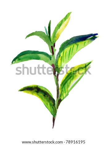 green tea leaves. watercolor - stock photo