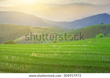green terraced rice field at Chiangmai Thailand - stock photo