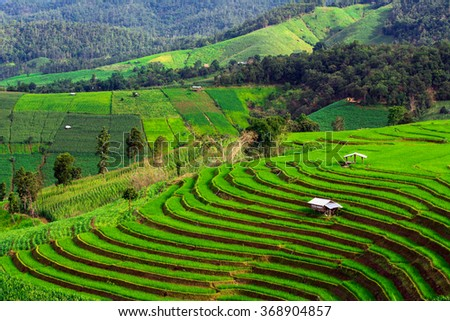 Green Terraced Rice Fields  in North Thailand. Pa Bong Piang rice paddy field in Chiang mai Thailand. - stock photo