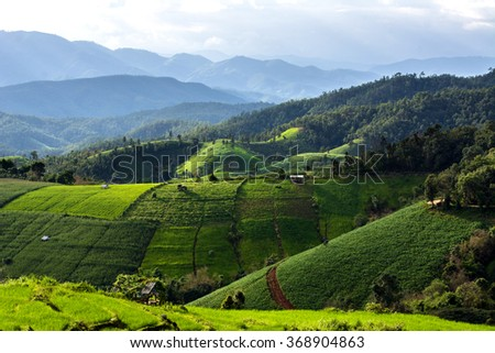 Green Terraced Rice Fields  in North Thailand. Pa Bong Piang rice paddy field in Chiang mai Thailand - stock photo