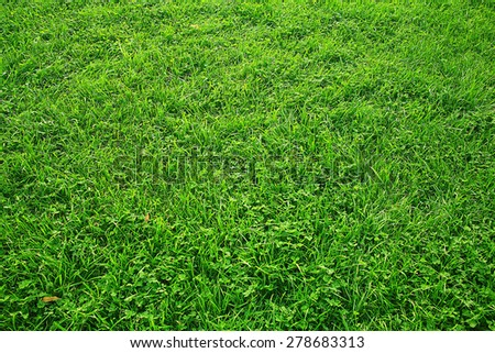 Green texture of grass lawn - stock photo