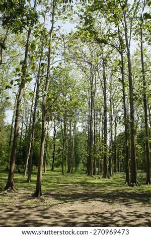 Green tree                        - stock photo
