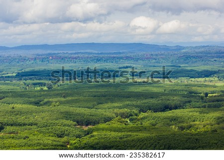green tree aerial view of forest - stock photo