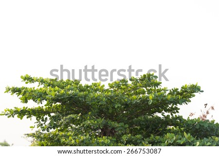 Green tree and leaf - stock photo