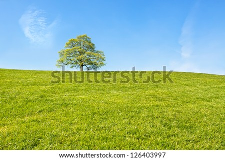 Green tree at the top of the hill / Lonely tree - stock photo