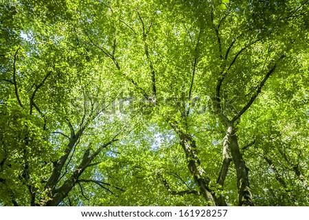 Green tree canopy background. - stock photo