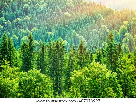 Green tree forest background, beautiful bird eye view on fresh pines in the morning sun light, Europe, Germany, Alpine mountains - stock photo