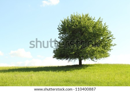Green tree in full leaf in a field summer - stock photo