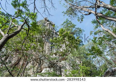 Green tree in the forest - stock photo