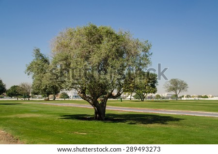 Green tree in the park - stock photo