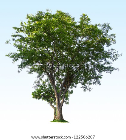 Green tree isolated on clear blue gradient background - stock photo