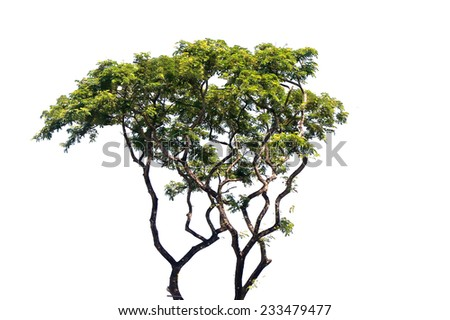 green tree isolated on white background - stock photo