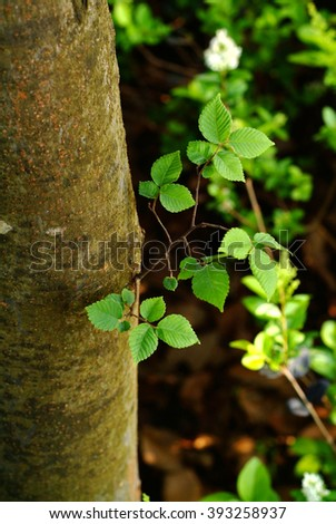 Green tree leaves isolated, in the spring forest.Beech leaves. - stock photo