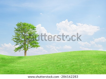 Green tree on a field with blue sky background - stock photo
