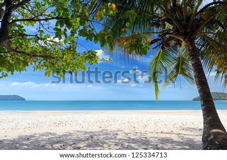 Green tree on a white sand beach. - stock photo