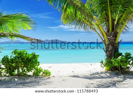 Green tree on a white sand beach. Malcapuya island, Coron, Philippines. - stock photo