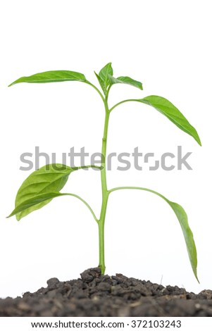 green tree sprout plants growing hope ecology on white background - stock photo