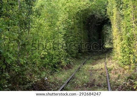 green tree tunnel - stock photo