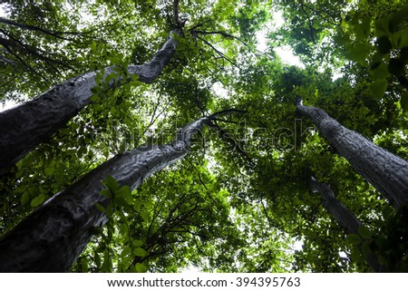 Green trees against the shiny sky background. - stock photo