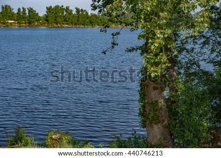 Green trees by the lake on a sunny day - stock photo