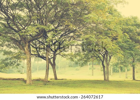 Green trees in park, a morning view in vintage toned. - stock photo