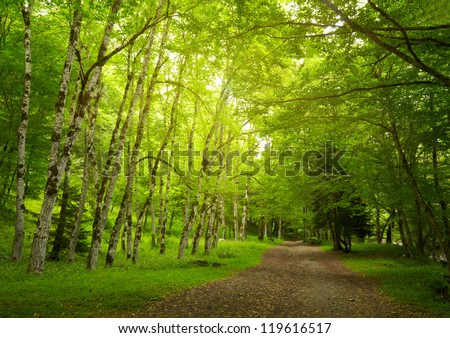 Green trees in the park - stock photo