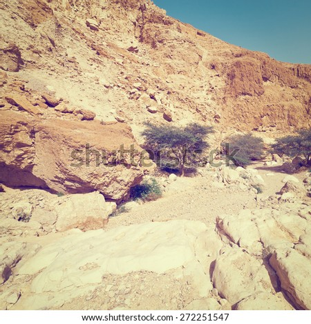 Green Trees in the Rocky Desert Canyon in Spring, Israel, Instagram Effect - stock photo