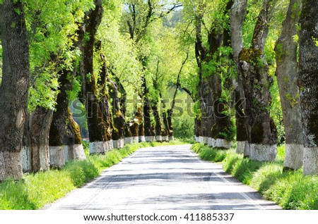 green tunel forest clean road in the Alentejo,Portugal - stock photo