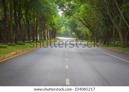 green tunel forest clean road in the early morning, Thailand. - stock photo
