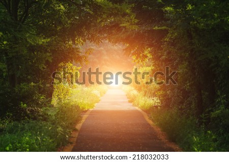 green tunnel, road and sun - stock photo