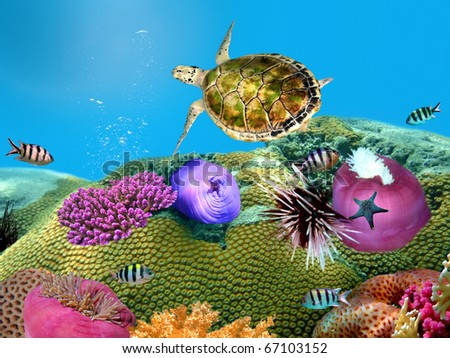 Green turtle underwater on a coralal reef - stock photo