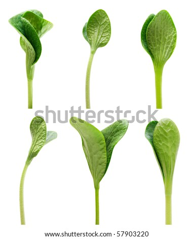 Green twisted sprout set isolated on white background - stock photo