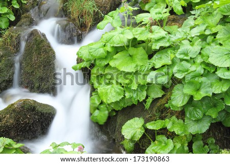Green vegetation close to a stream in Asturias, Spain. - stock photo
