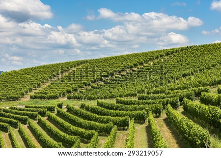 Green vineyards on the hills of Piedmont, Northern Italy. - stock photo