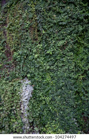 green wall and green concept - stock photo