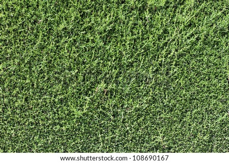 Green wall background dark edge - stock photo